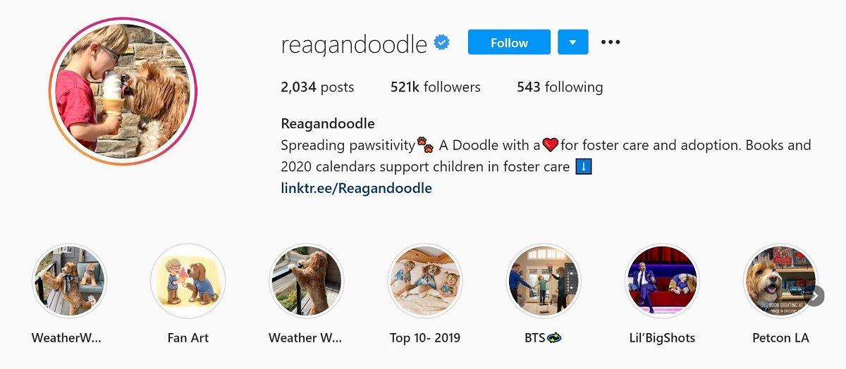 Reagan & Doodle Instagram bio